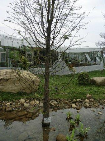 Khokak Panoramas Hotel:                   園區植物