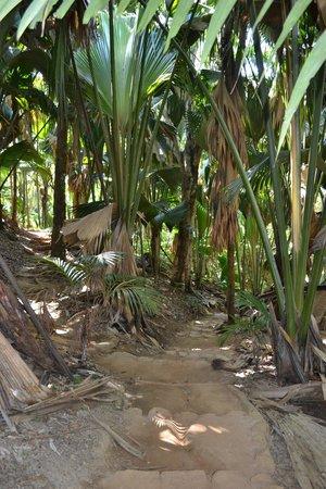 Vallee de Mai Nature Reserve: 7