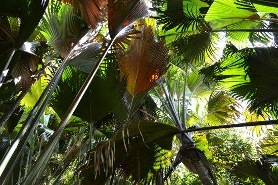Praslin Adası, Seyşeller: 1