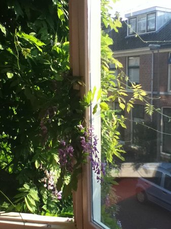 B&B Limes Oudwijk:                   view from bay window in room