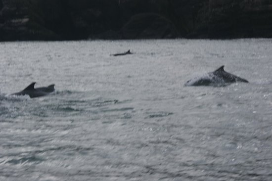 Castle Charter & Marine Service : Dolphins beside the boat