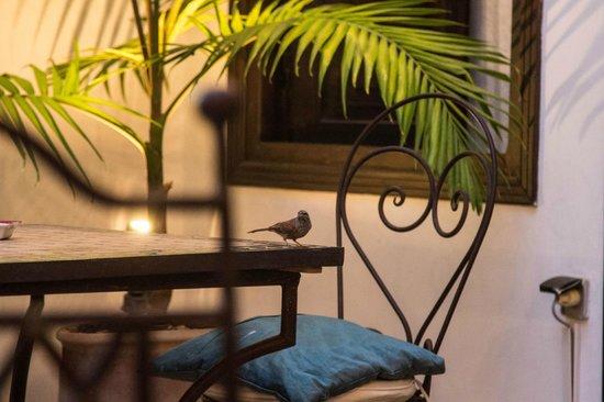 Riad Les Trois Mages :                   The courtyard