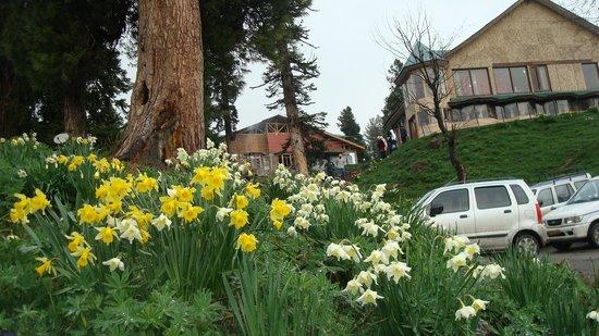 The Pine Palace Resort:                   Sunil