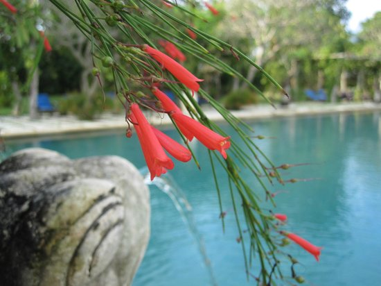 Naya Gawana Resort & Spa: Fleurs près de la piscine