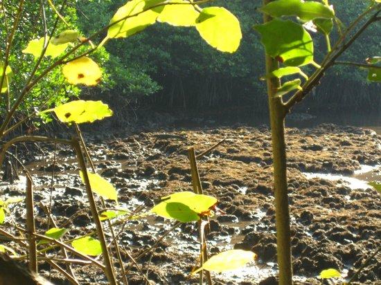 Naya Gawana Resort & Spa: La mangrove