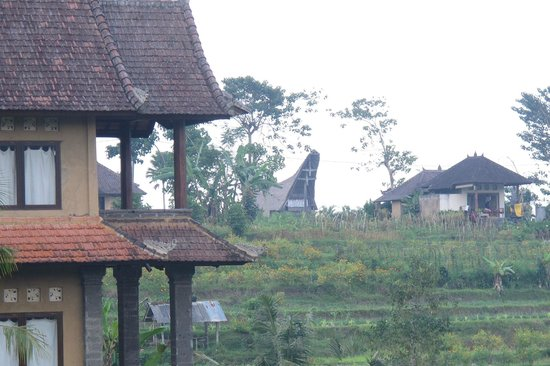Bebek Biru Sideman Bali :                   View from porch of room