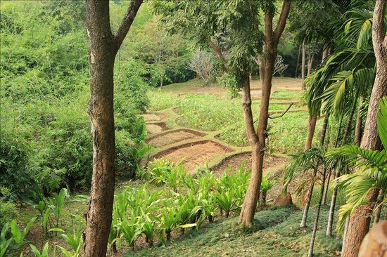 Suanthip Vana Resort:                   resort has small field