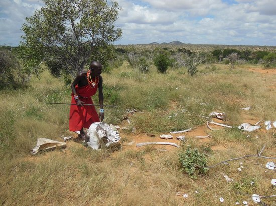 Kiboko Camp: elefante :ossa