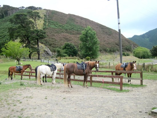 Happy Valley Adventures: our horses all geared up waiting for us!