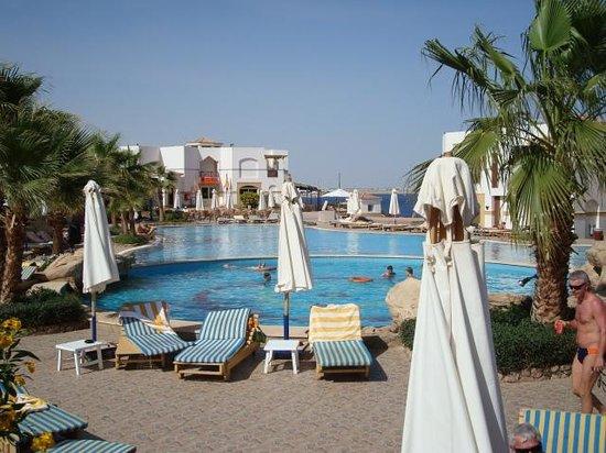 Shores Aloha Resort:                   pool