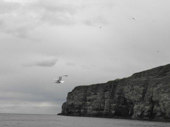 Castle Charter & Marine Service 사진
