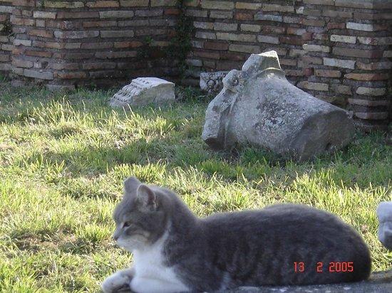 Ostia Antica: antico gatto romano.............. 