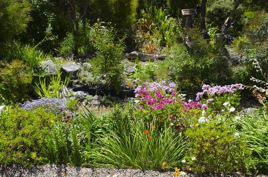 Bellbird Lodge: Jardín