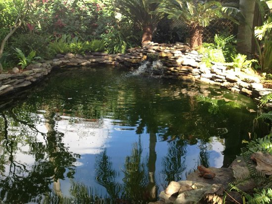 Lions Inn Bed & Breakfast :                   Fish Pond and water falls