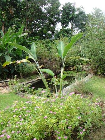 هوتل موكينج بيرد هيل:                   Meditation pool in the hotel's garden                 