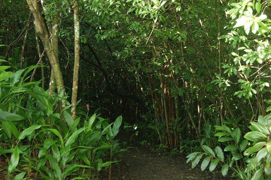 Garden of Eden, Maui, bamboo trail - Picture of Garden of Eden ...