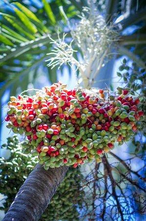 Sejour cabane dans les arbres picture of au jardin des for Au jardin des colibris