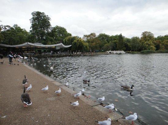 Corus Hotel Hyde Park London:                   لقطة في حديقة هايد بارك لندن تقع بجوار الفندق