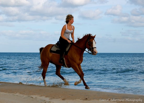 Equine Adventures: Beach Riding