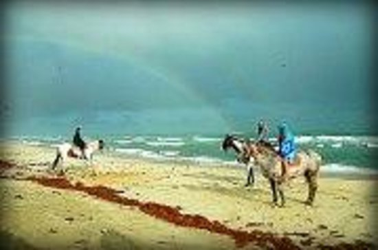 Equine Adventures: whats at the end of your rainbow?