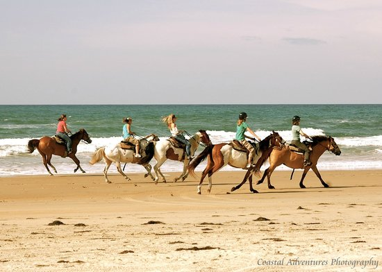 Equine Adventures: whose up for a beach ride?