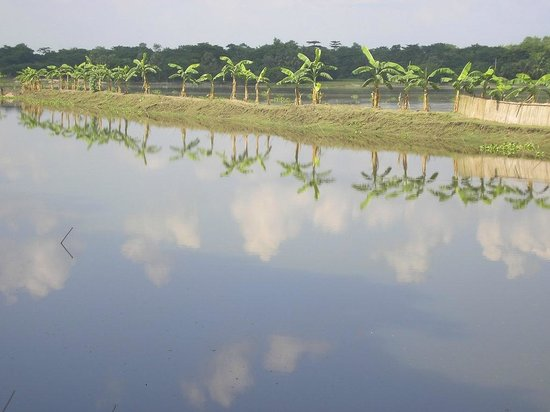 Bangladesh :                   nature's mirror