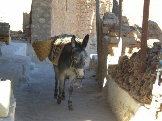 Hotel Meninx: Dans les ruelles de chénini
