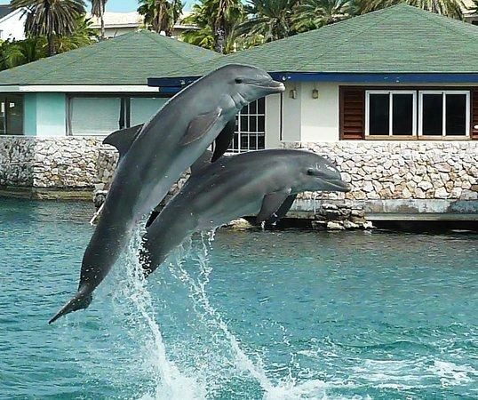 Dolphin Academy Curacao:                   wonderful animals