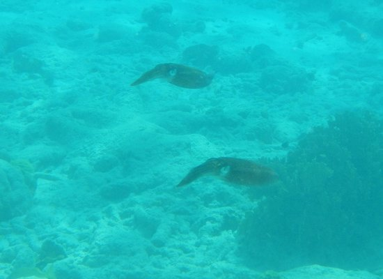 H2O Visions Bonaire:                   Happy squid couple