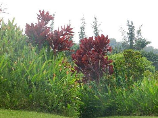 Foliage at Maui Garden of Eden - Picture of Garden of Eden Arboretum ...