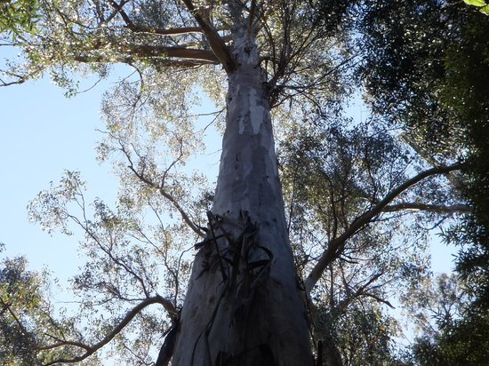Maydena Adventure Hub Tours:                   Tall Trees - Treetops, Mount Field National Park (Russel Falls-Tall Trees Walk