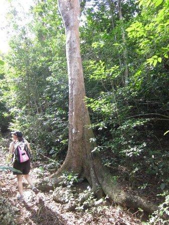 BioParque Rocazul:                   on the trail