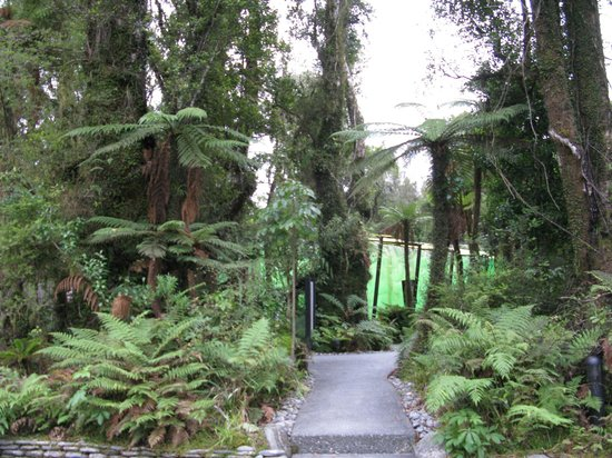 Te Waonui Forest Retreat:                   Walking to the Hot Pools
