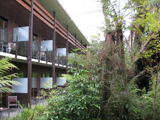 Te Waonui Forest Retreat:                   Rooms right up against the forest