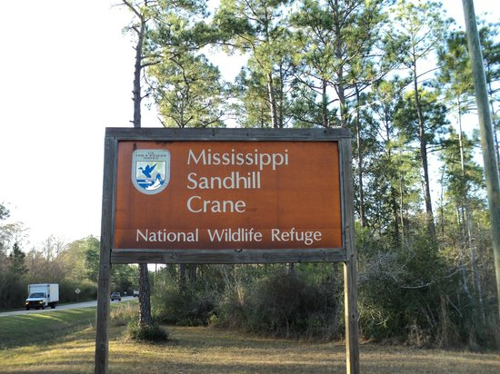 Mississippi Sandhill Crane National Wildlife Refuge 이미지