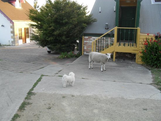 Hatcher's Manor:                   Missy and a Roaming Sheep outside Attic Room