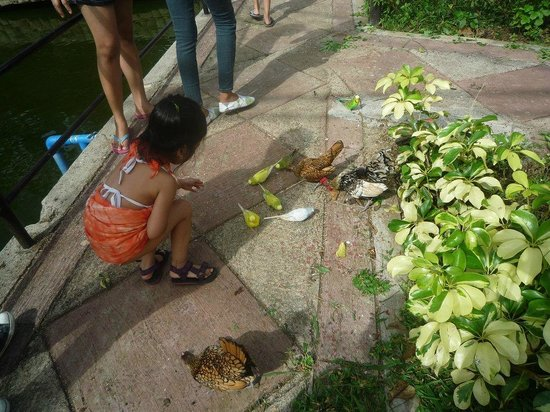 Tranca, Philippines: interacting with birds at Grand Aviary