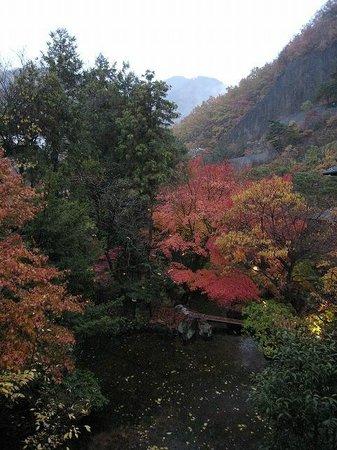 Sasaya Hotel:                   笹屋ホテル部屋から見た庭
