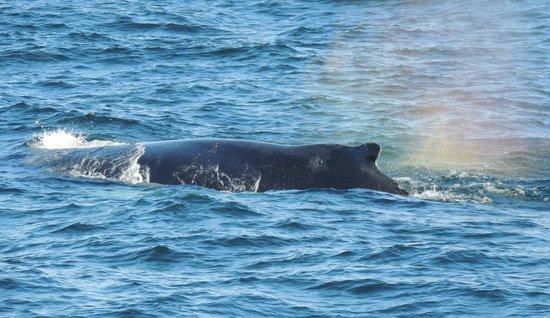 Dolphin Fleet Whale Watch:                   Einer von vielen...