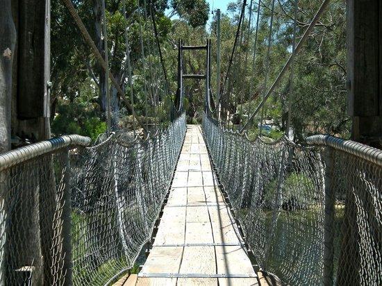 Avon River Suspension Bridge: Bouncy bridge!