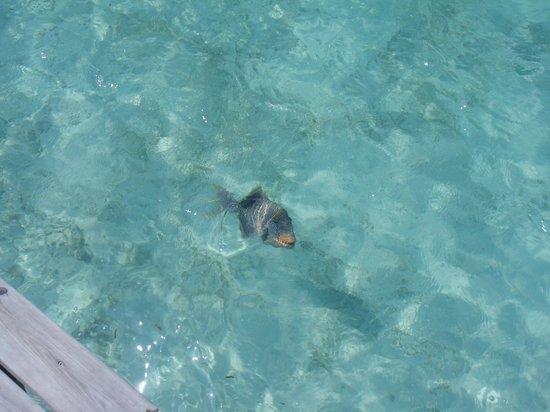 Kuredu Island Resort & Spa:                   depuis la terrasse
