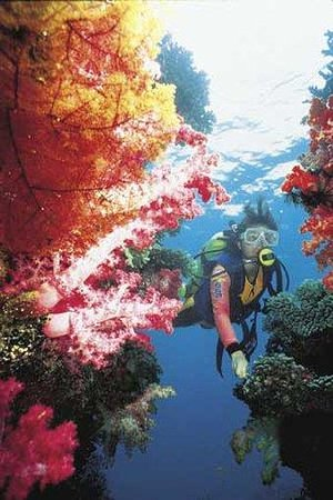 Jean-Michel Cousteau Resort: Scuba Diving - - Soft Corals