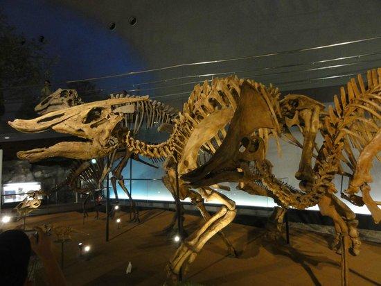 Fukui Dinosaur Museum:                   いろんな想像がふくらみます