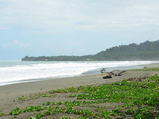 Chimuri Beach Retreat : The Beach 100 yeards away