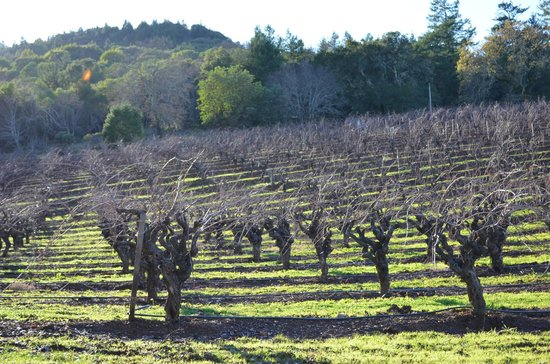 Bella Vineyards and Wine Caves:                   vineyards surrounding Bella