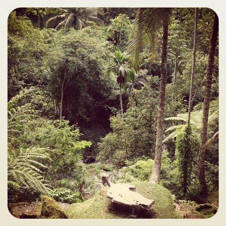 COMO Shambhala Estate, Bali:                   View from spring pool's sundeck (toward Ayung River)