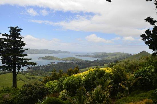 Awesome Tours:                   Dunedin Bay
