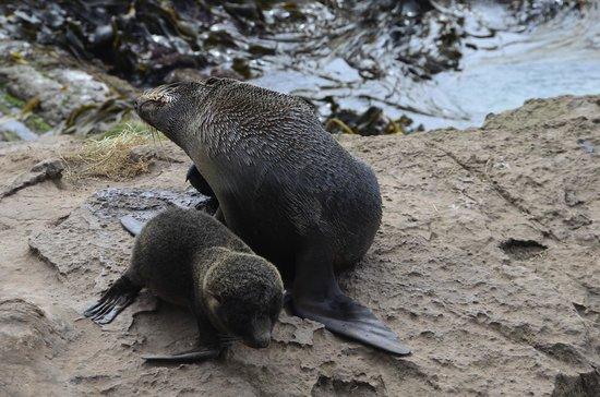 Awesome Tours:                   Argo Wildlife