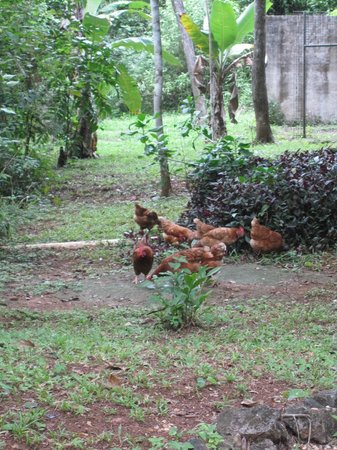 Moonracer Farm Lodging & Tours:                   The farm's chickens