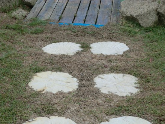 Dolphin Inn - TEMPORARILY CLOSED:                                     Seashell stepping stones LOVE !